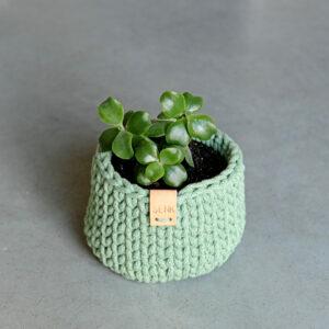 Plantenmand klein – Eucalyptus Green